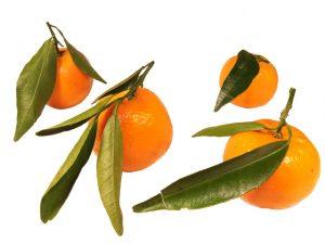 mandarine-1329299-640x480